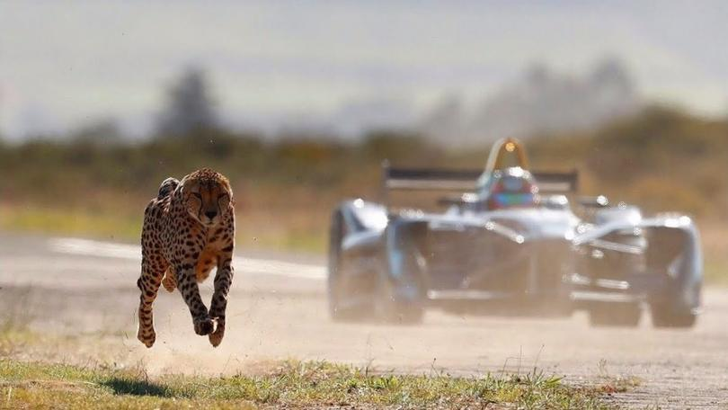A cheetah races against a Formula E car
